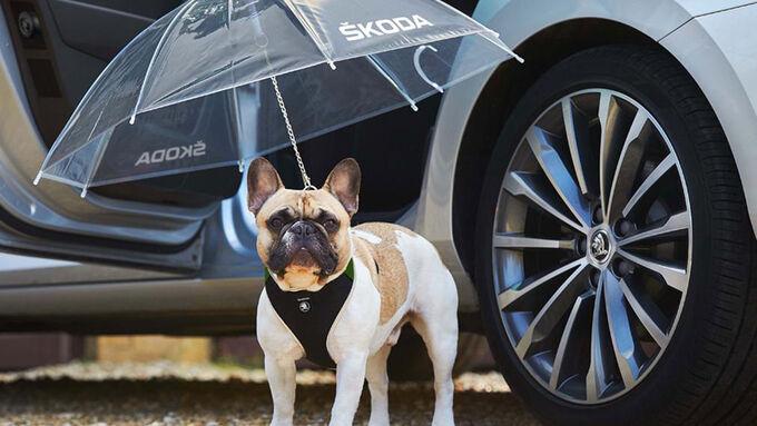 Skoda Superb Hund Regenschirm Aprilscherz